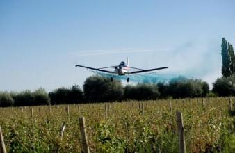 La Municipalidad de Junín realizó una fumigación aérea a viñedos afectados por el granizo