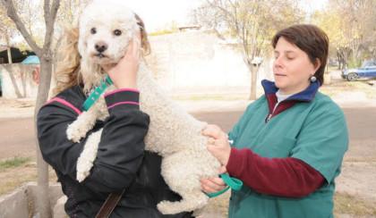 La Municipalidad de Rivadavia continúa con el programa de Vacunación Antirrábica