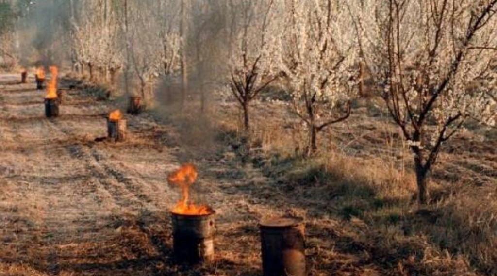 Las heladas han castigado duro a los productores de Mendoza