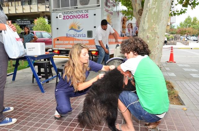 vacuna a perros