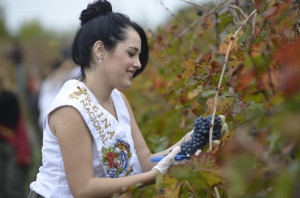 Junín realizó la primera molienda de uvas en la Bodega Escuela Municipal