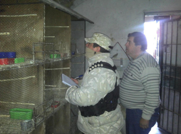 Secuestran gran cantidad de aves silvestres en un allanamiento en Palmira