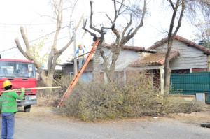 Continúa la poda de árboles en calles de Rivadavia
