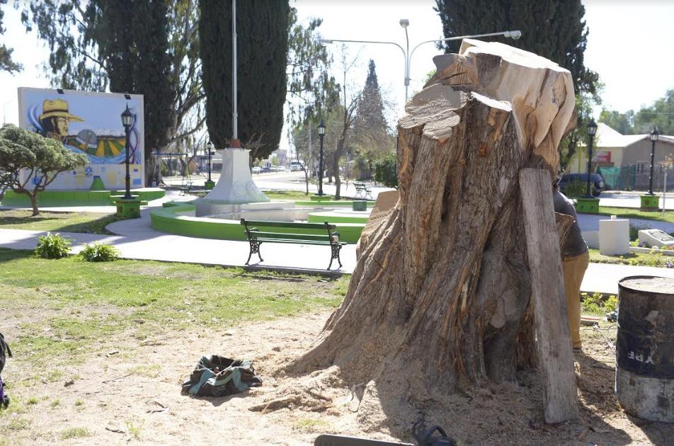 EL ARBOL DEL BICENTENARIO COMIENZA A TOMAR FORMA EN LOS BARRIALES