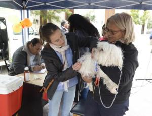 Operativo de castración de mascotas 2017